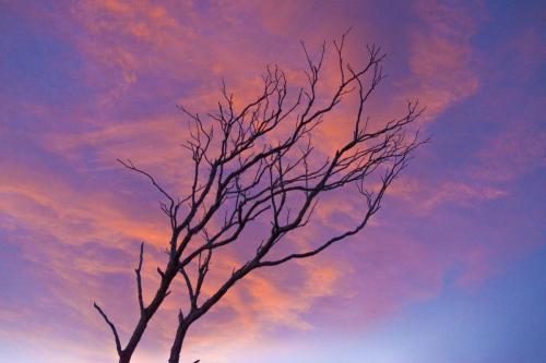 Baum voor Abendhimmel