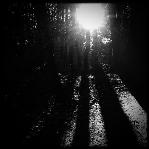 Klavier-Schatten im Wald