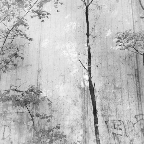 Kleiner Baum vor Beton