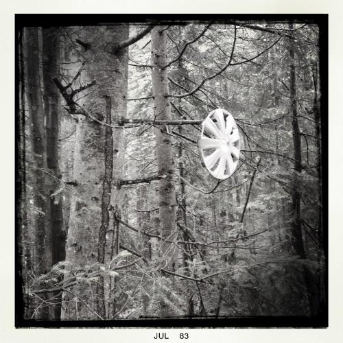 Radkappe im Baum