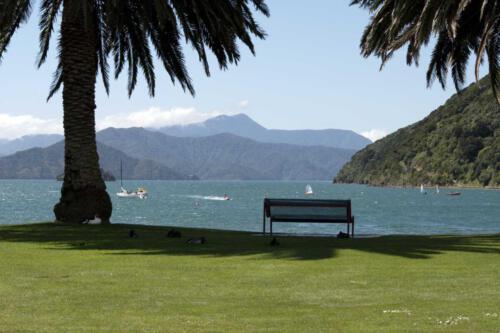 Bucht-Neuseeland-Palmen-Bank