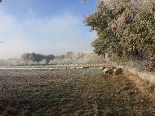 Am Feld im Winter