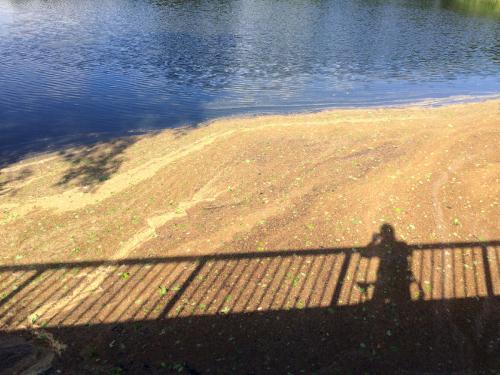 Am Teich mit Farben
