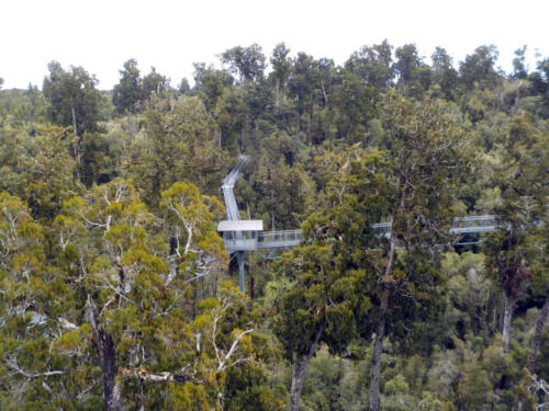 Neuseeland-Baume-Park