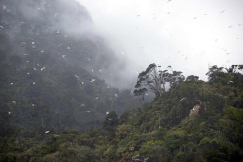 Neuseeland-Berg-Fels-Moewen