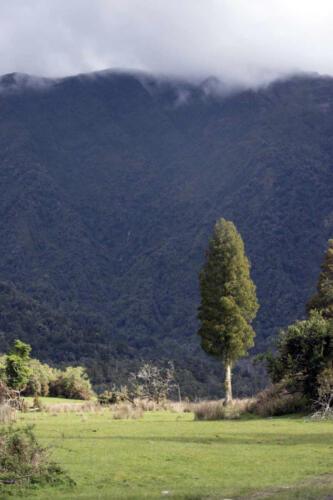 Neuseeland-Berg-Wald-Baum-im-Licht