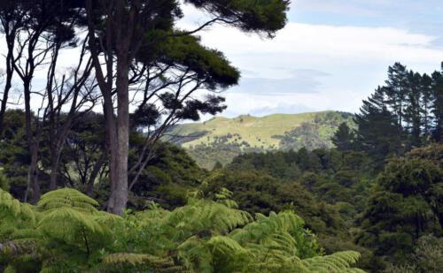 Neuseeland-Blick-Wald