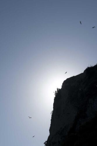 Neuseeland-Felsen-Abend-Sonne-Licht-Moewen-Himmel