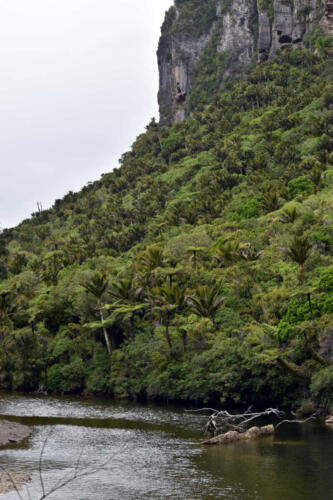 Neuseeland-Fluss-Wald-Felsen