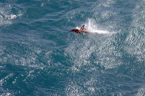 Neuseeland-Meer-Delphin-Faehre