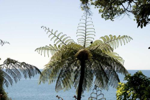 Neuseeland-Meer-Fahn-Baume