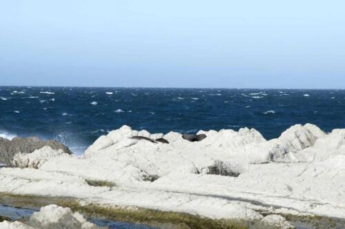 Neuseeland-Strand-FelsenMeer-Robben