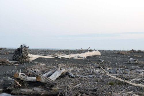 Neuseeland-Strand-Holz