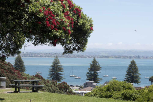Neuseeland-Tauranga-Meerblick