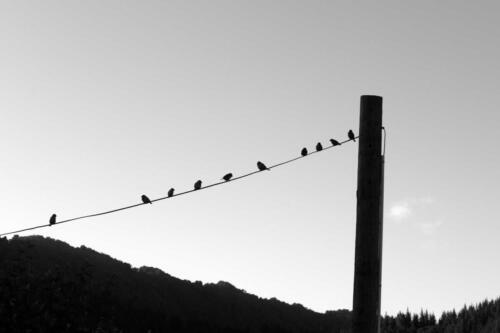 Neuseeland-Voegel-auf-Kabel