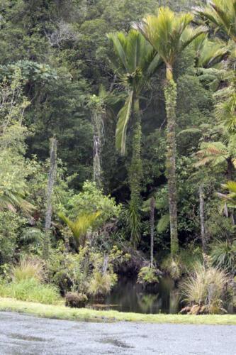 Neuseeland-Wald-Baueme