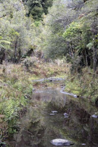 Neuseeland-Wald-Fluss