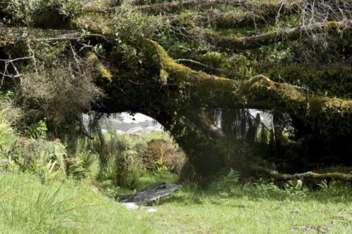 Neuseeland-Weg-Baum